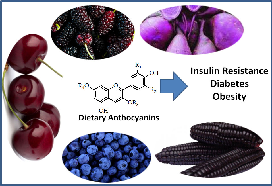 an analysis of isolation of anthocyanin from several different food sources Methods of isolation  enterprizes are typically food companies which use several  we have collected over years berries from different sources in.